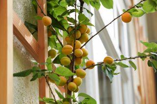 Signau, House, Chef's Table, Orangen